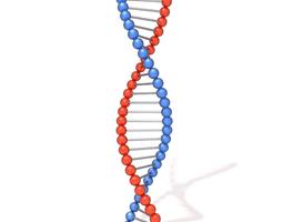 DNA molecule 3D
