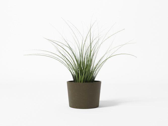 bush - pot - plant 3d model obj mtl 3ds fbx c4d 1