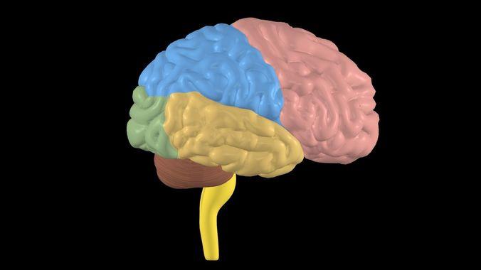 nervous system 3d model max obj mtl 3ds fbx 1