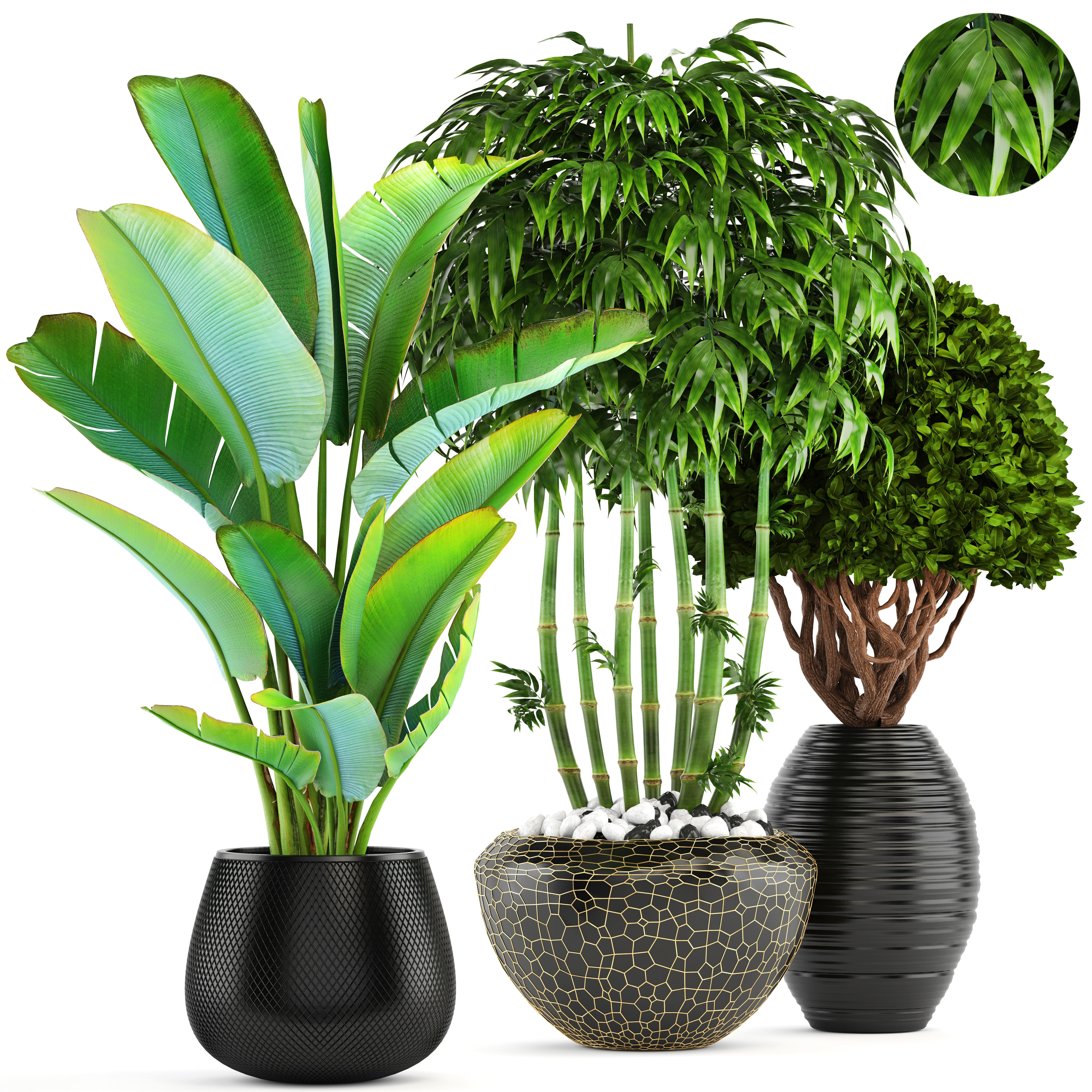 Bush 3d Model Collection Of Tropical Plants Cgtrader
