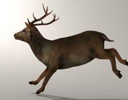Game Ready Deer Model 3D asset