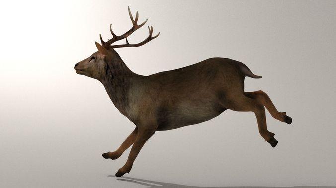 game ready deer model 3d model rigged animated fbx blend dae 1