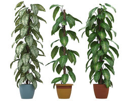 Philodendron philodendron 3D model
