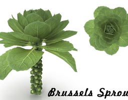 Brussels Sprouts 3D