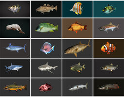 Low poly Fish Collection Animated - Game 3D asset 2