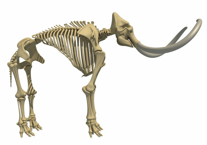 mammoth skeleton 3d model max obj mtl 3ds c4d lwo lw lws ma mb 1