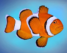 Fish Amphiprion percula 3D asset animated