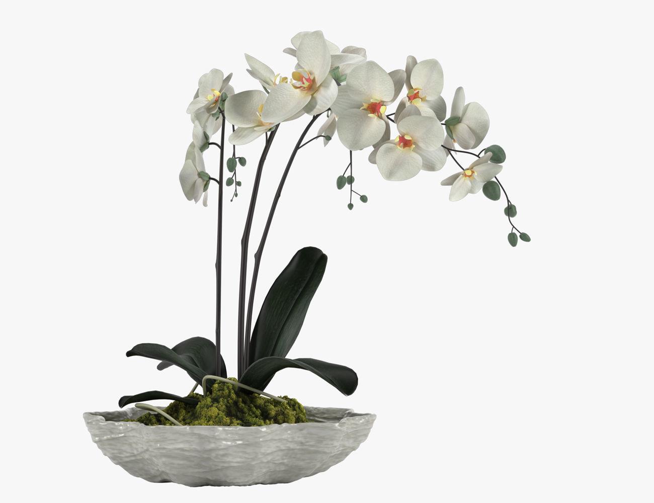 Pot Plant 24