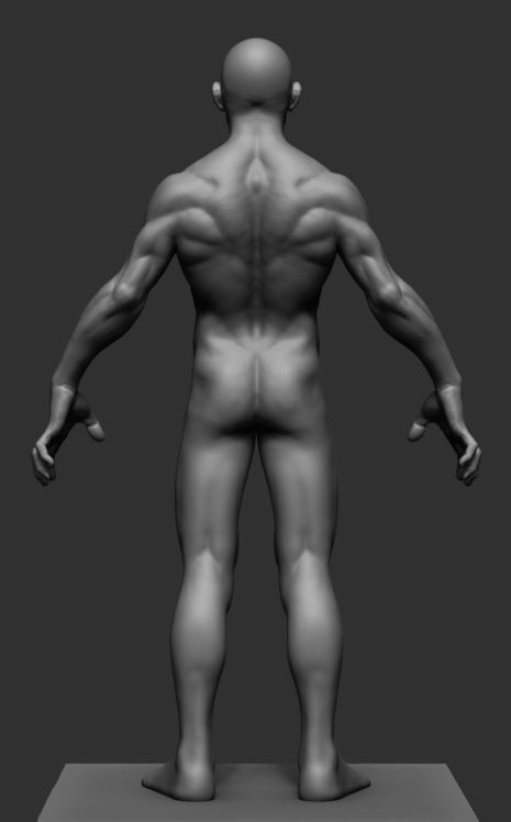 3D model Male Anatomy v3   CGTrader