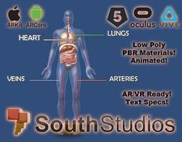 Animated Human Circulatory System AR VR Unity animated