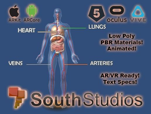 animated human circulatory system ar vr unity 3dsmax 3d model low-poly animated max unitypackage prefab 1