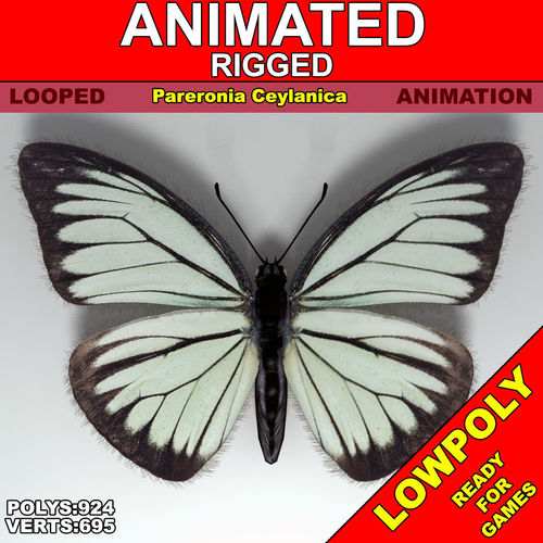 butterfly - pareroniaceylanica 3d model low-poly rigged animated max fbx 1