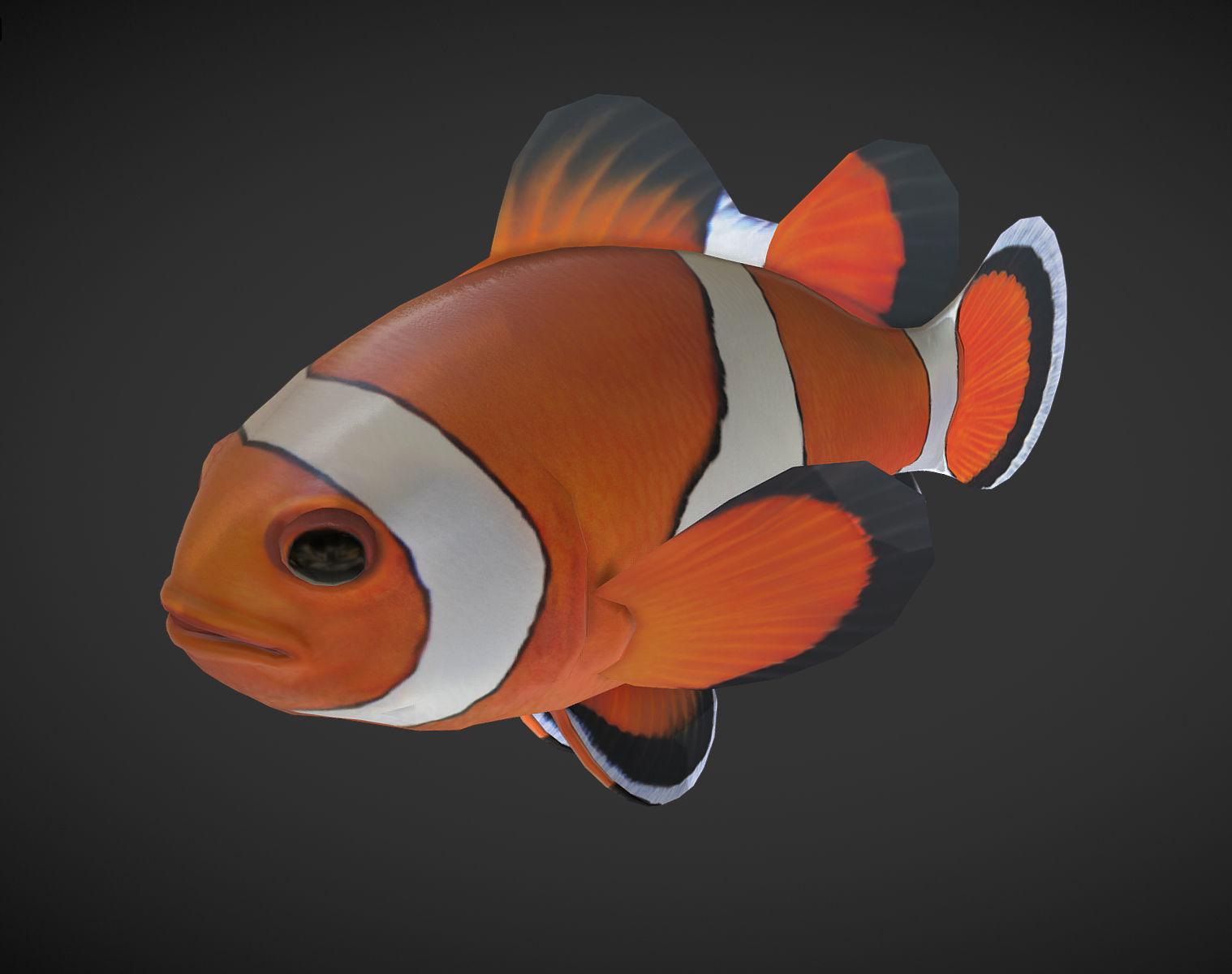 3D model Clown Fish | CGTrader