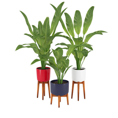 plant 13 3d model max obj mtl 3ds fbx mat 1