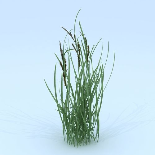 forest flowers and plants - flowers grass 02957 3d model max obj mtl 3ds fbx 1
