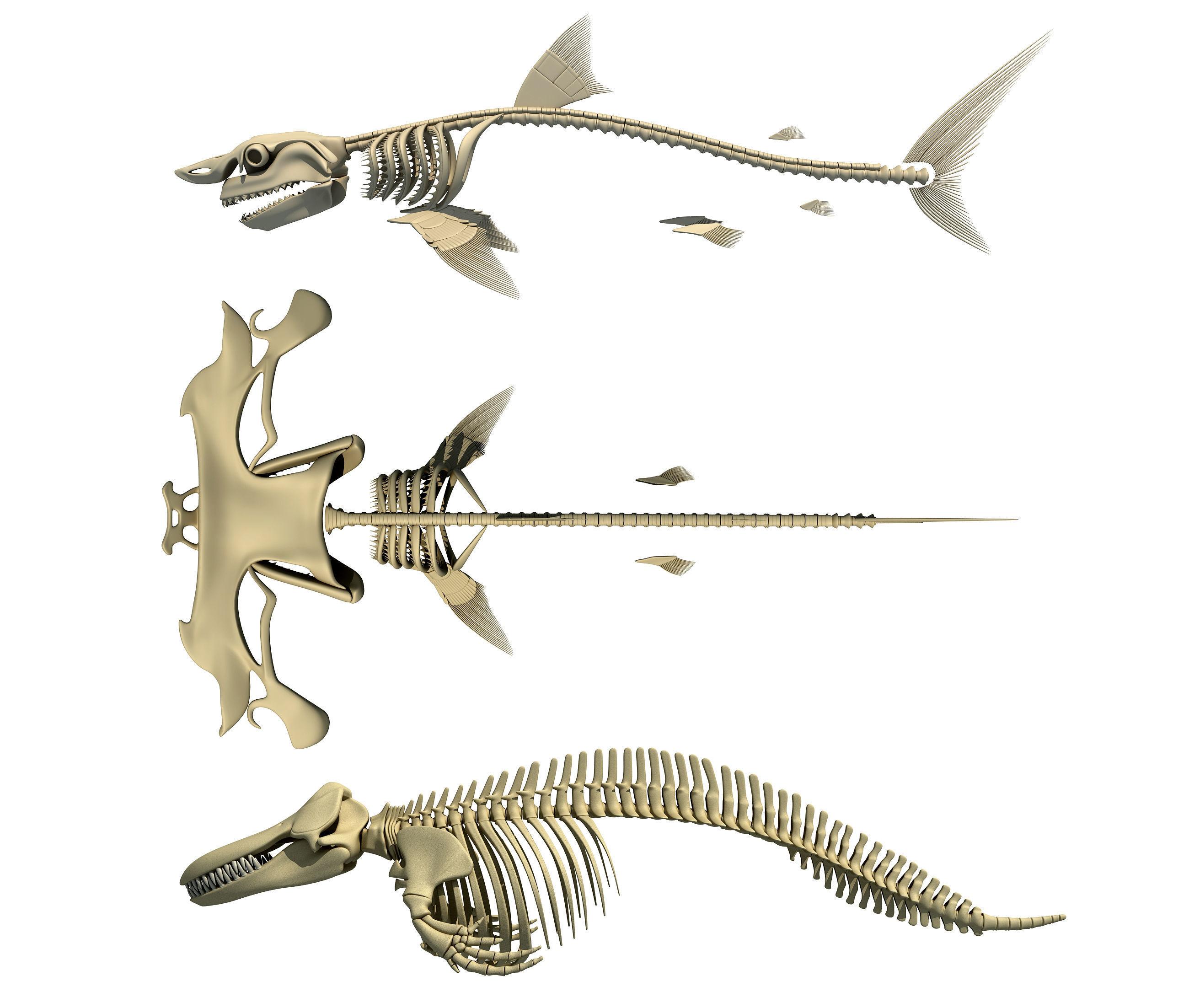 Sharks Skeletons 3D Models