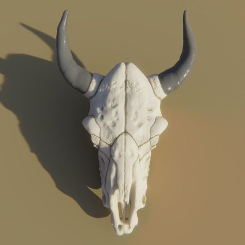 cow skull 3d model obj mtl 3ds fbx stl blend dae 1