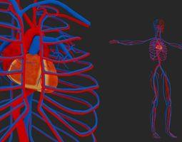 3D model Circulatory System