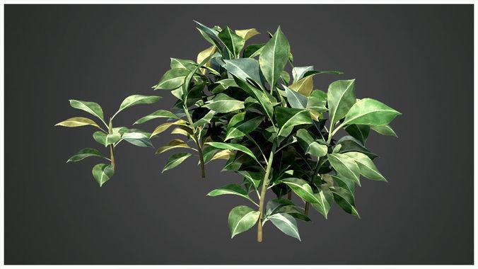plant 3d model obj mtl fbx ma mb 1