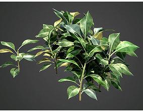 leaves 3D model Plant