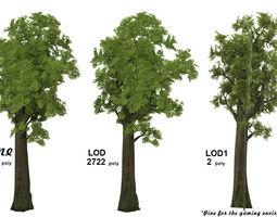 Pine- 3D asset