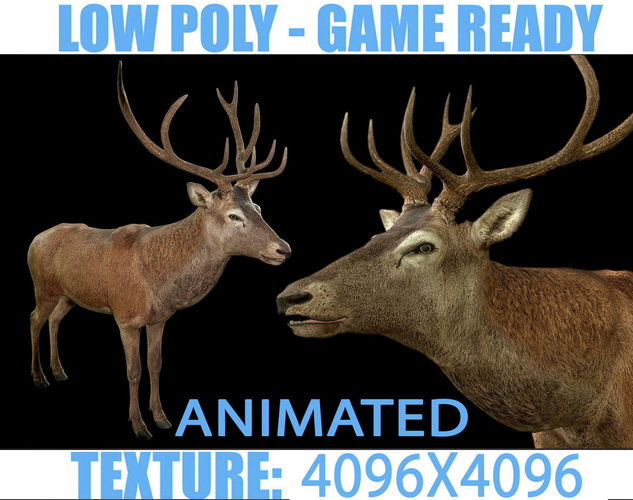 deer animated 3d model low-poly rigged animated max obj mtl 3ds fbx dae tga 1