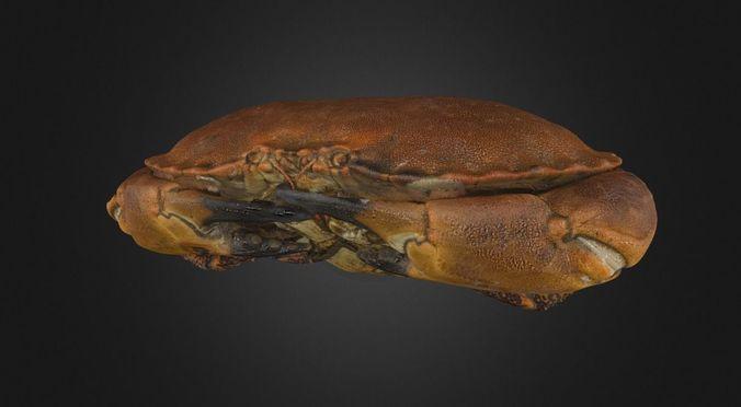 crab - crustacean 3d model obj mtl 3ds fbx 1
