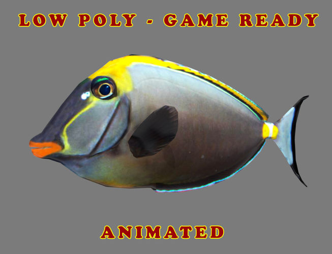 low poly orangespine unicornfish animated - game ready 3d model low-poly max obj mtl fbx 1