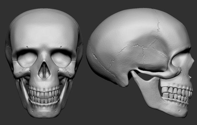 human skull 3d model obj mtl stl 1