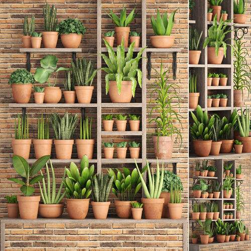 collection of plants in clay pots 3d model max obj mtl fbx unitypackage prefab 1