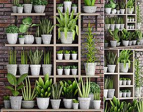 Collection of plants in concrete pots 3D model