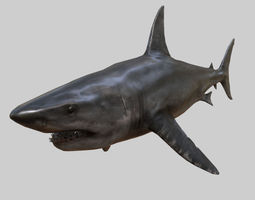 SHARK 3D MODEL - ANIAMTED animated low-poly