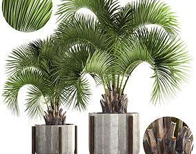 Collection palms Butia capitata 3D