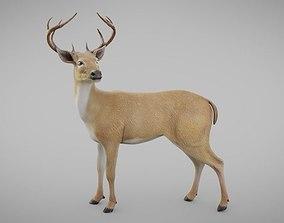Realistic Deer 3D asset