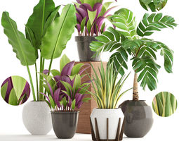 Collection of plants elegans 3D model