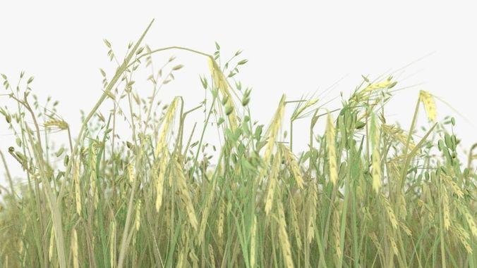 wheat field 3d model max obj mtl fbx stl blend dae 1