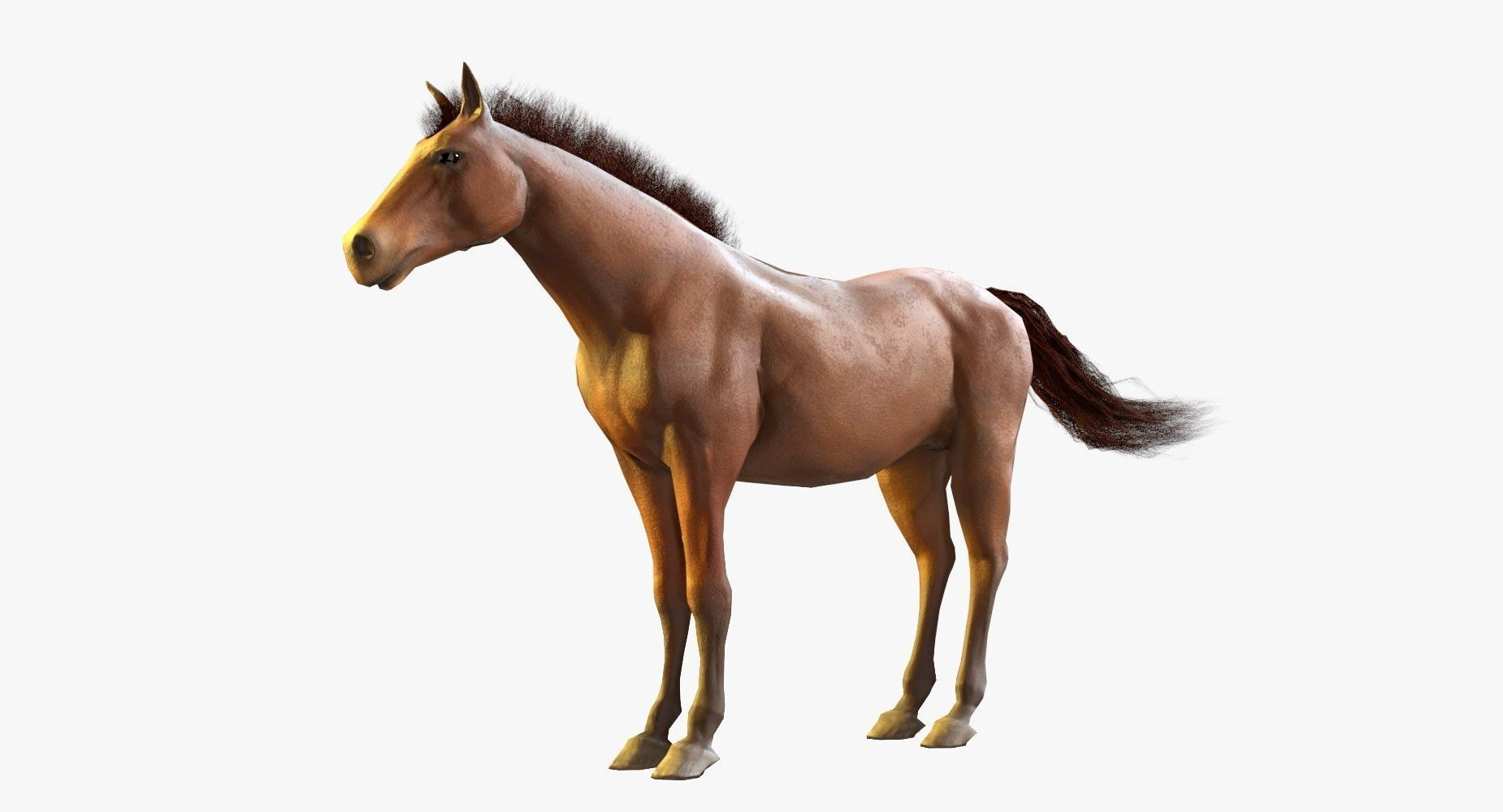 Horse Textured