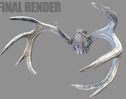 3D model Deer Horns