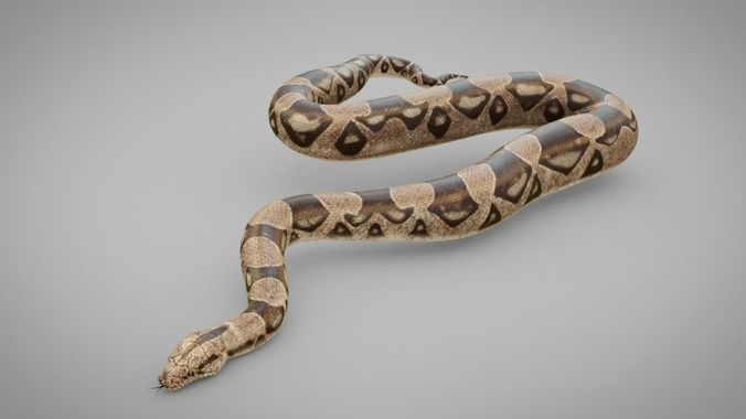 snake 3d model obj mtl 3ds fbx 1