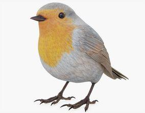 3D model Robin Bird