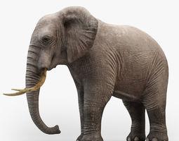 animated Animated Elephant 3D model