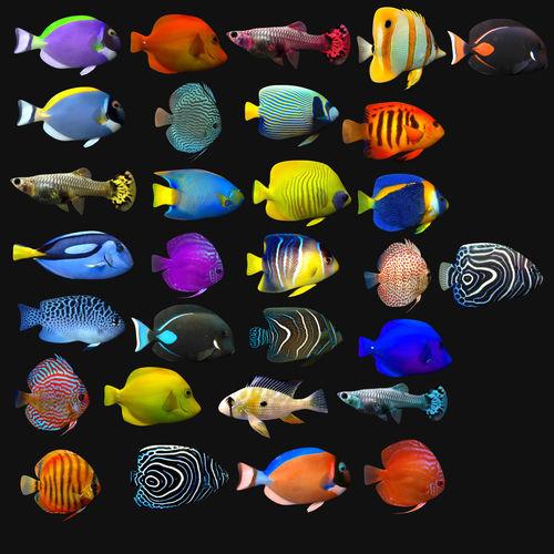 Tropical Fish Megapack 3d Asset Cgtrader
