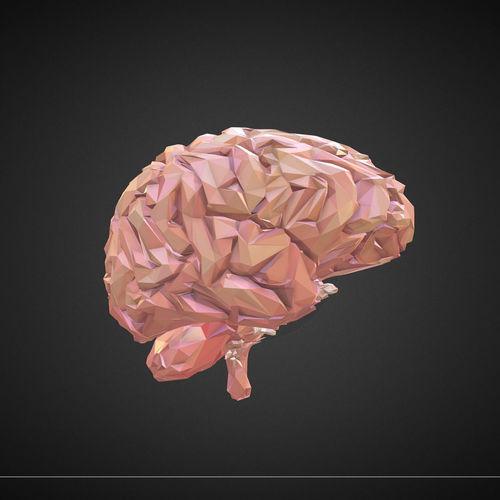 low polygon art medical brain real 3d model animated max obj mtl 3ds fbx ma mb tga 1