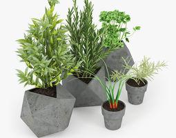 3D basil Concrete Kitchen Plants