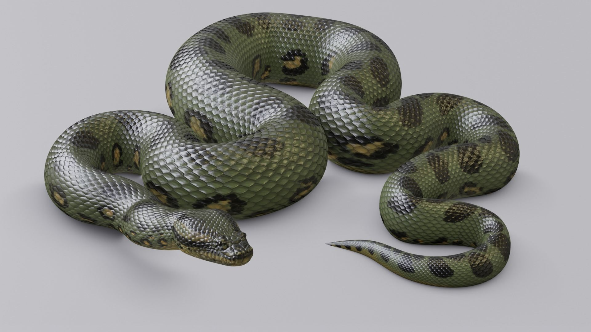 Animated Green Anaconda