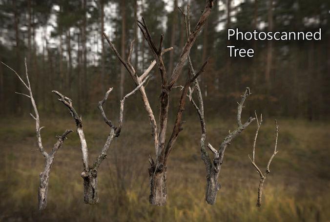 photorealistic photoscanned tree 3d model low-poly obj mtl tga unitypackage prefab 1
