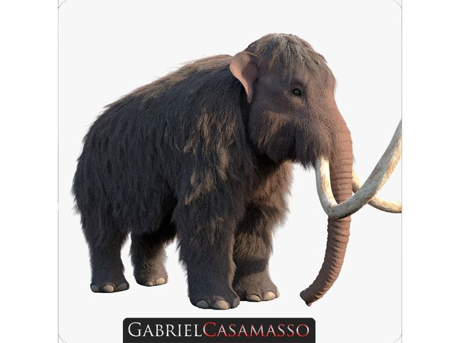 woolly mammoth - mammuthus primigenius 3d model obj mtl c4d 1