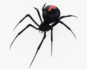 Black Widow Spider Rigged 3D asset
