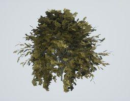 3D asset Tree Color