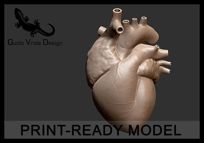 printable accurate human heart 3d model obj mtl stl 1